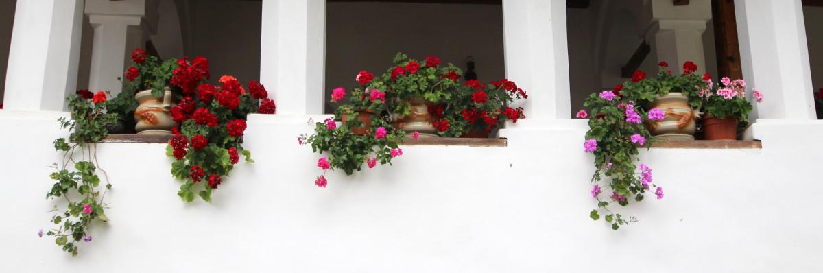 kostenlose foto pflanze blume fenster rustikal. Black Bedroom Furniture Sets. Home Design Ideas
