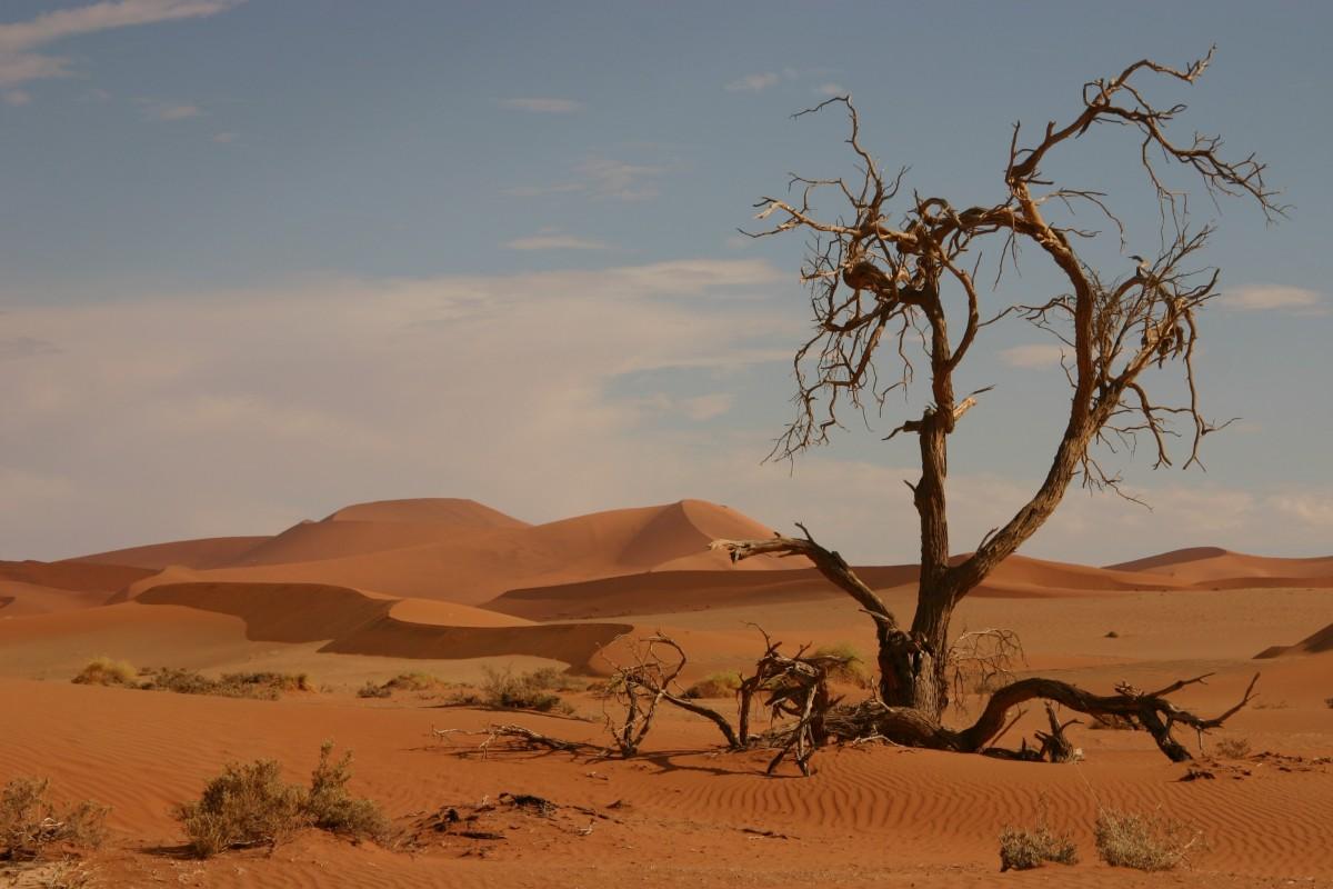 images gratuites paysage le sable prairie d sert sol arbre mort savane plaine plateau. Black Bedroom Furniture Sets. Home Design Ideas