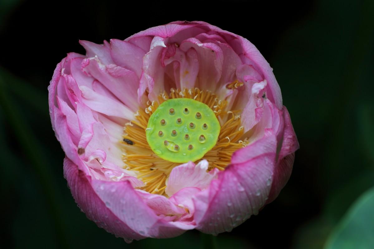нарост никогда картинки как расцветают цветы раз