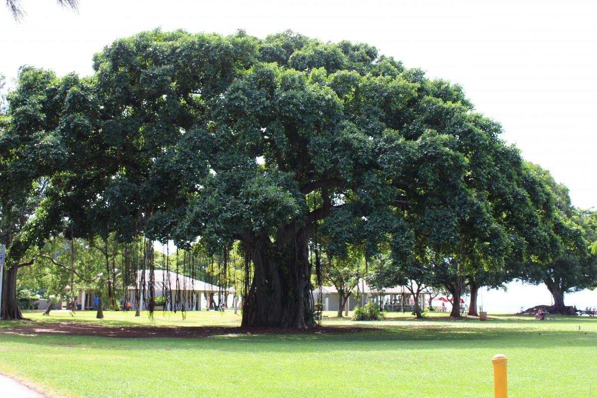 Fotos gratis madera sol c sped hoja viento verde for Arboles para plantar en verano