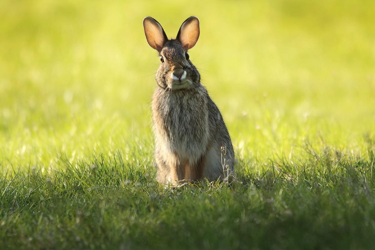 Картинки про зайца с длинными ушами